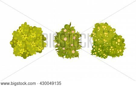 View From Above Of Green Bushes Set. Park And Garden Decorative Elements, Summer Landscape Design Ca