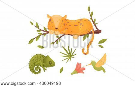 Cute Exotic Animals Set. Panther, Chameleon And Hummingbird Cartoon Vector Illustration