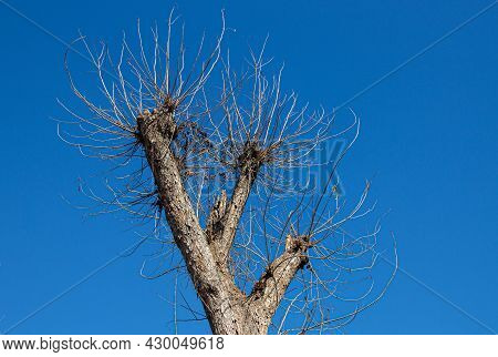 Leafless Dry Branches Against Deep Blue Sky