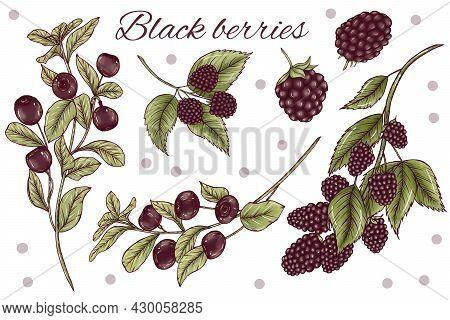 Elegant Black Forest Berries Design Elements, Rustic Wedding Decoration Diy, Berries With Leaves, Br