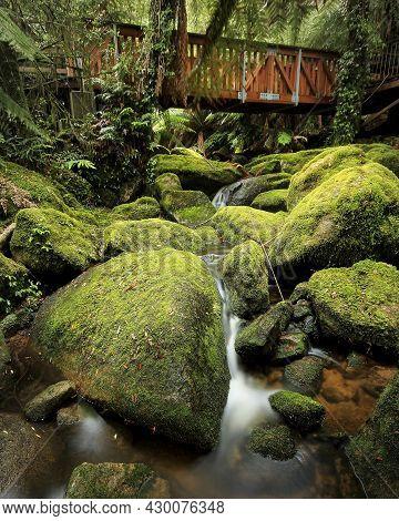 Bridge Over Cascades And Mossy Rocks Near Glenbog In Nsw