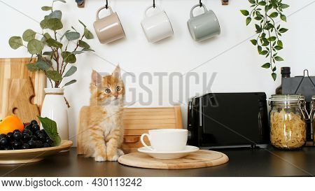 Cute Red Kitten Playing On The Kitchen Table. Little Ginger Striped Cat Siting On Table And Looking
