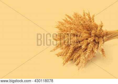 Beautiful Sheaf Of Rye On Yellow Background. Harvesting Concept. Minimalism
