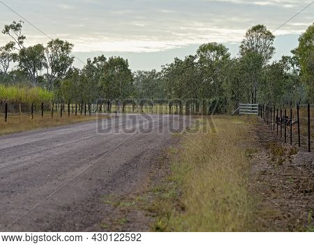 A Country Dirt Road Lined With Fenced Paddocks For Grazing Cattle And Growing Sugarcane
