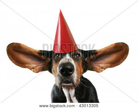 a basset hound with his ears flying away with a birthday hat on
