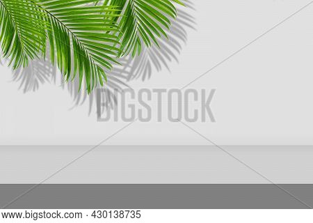 Empty Space Studio Room Of Gray Gradient Background With Green Palm Leaves And Shadow On Wall.