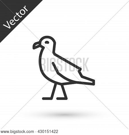 Grey Line Bird Seagull Icon Isolated On White Background. Vector