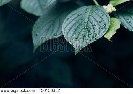Colorful leaves and water drops background. Fresh foliage on dark green and blue background.