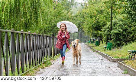 Little girl walking under rain with umbrella and golden retriever dog, panoramic orientation