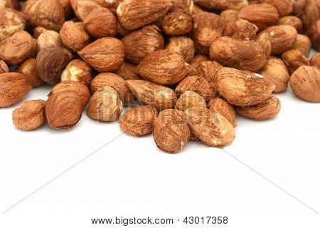Many hazel nuts on white background