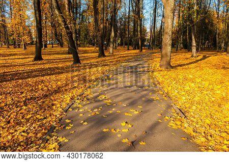 Autumn landscape. Autumn in the city park. Park autumn alley in sunny autumn weather, autumn landscape, autumn trees, autumn park alley