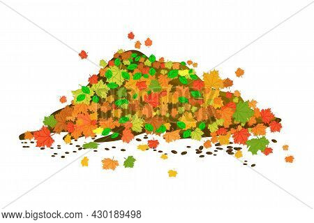Pile Of Autumn Leaves Isolated On White Background. Big Heap Colorful Maple Foliage. Multicolored Dr