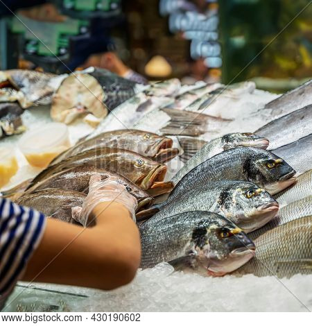Showcase Fish Shop, Fish Lying On Ice. Hand Of Seller With Seafood. Sale Of Fresh Fish