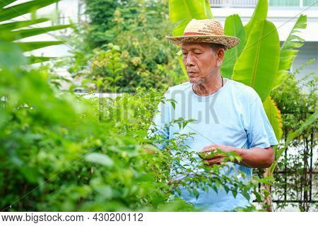 Happy Asian Elderly Man Gardening And Planting Trees At Home Social Distance To Prevent Covid-19. El