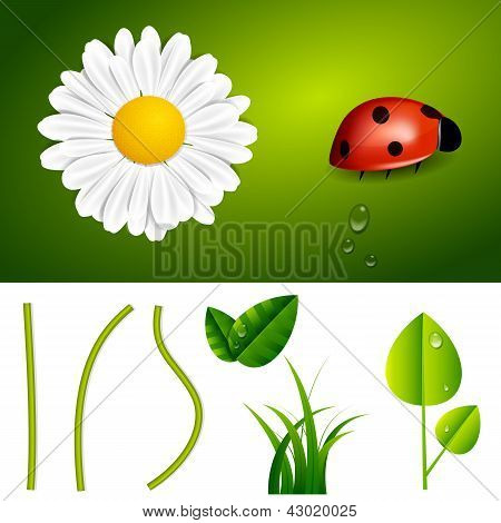 Fresh Spring And Summer Nature Elements