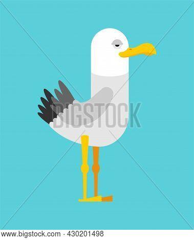 Gull Cartoon Isolated. Seagull Sea Bird Vector Illustration.