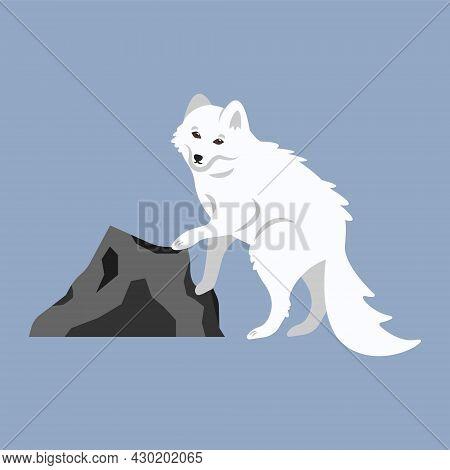 Beautiful Cute Fluffy White Arctic Fox. Cartoon Illustration Of A Wild Polar Animal From The Tundra,