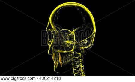 Human Teeth Canine Anatomy 3D Illustration