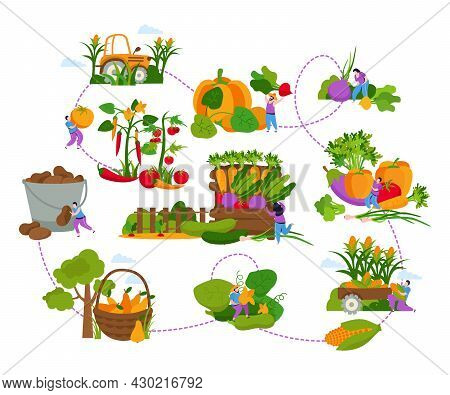 Harvesting Flat Composition With Flowchart Of Isolated Images With People Gathering Fruits And Veget
