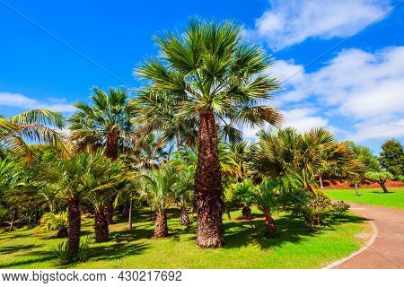 Madeira Botanical Garden Or Jardim Botanico In Funchal City, Madeira