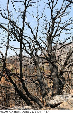 Abstract Image Of Burnt And Parched Branches Caused From A Wildfire On A Mountain Ridge Taken At A D