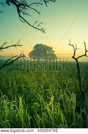 A Beautiful Summer Morning Scenery Framed By Bare Oak Tree Branches. Summertime Scenery Of Northern