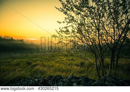 A Summer Morning Scenery With Bush Branches. Summertime Scenery Of Northern Europe.