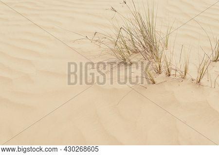 Desert Plants. Grass Growing In Wild Sandy Desert