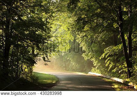 Road forest path Nature sunrise Nature background Nature sun landscape Nature landscape Nature background landscape Nature trees Nature landscape Nature background landscape fog Nature background light Nature landscape Nature landscape Nature background.