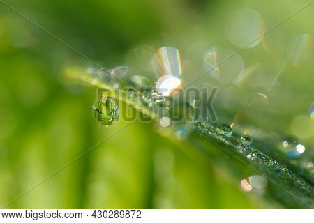 Abstract Background Of Grass With Raindrops, Shallow Depth Of Field And Boke