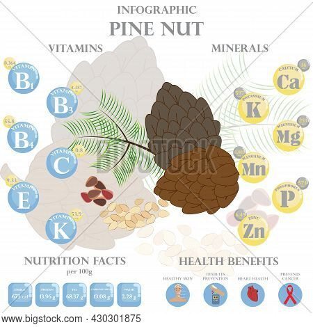 Infographic About Nutrients In Pine Nut. Vector Illustration Of Pine Nut, Vitamins, Nuts, Healthy Fo
