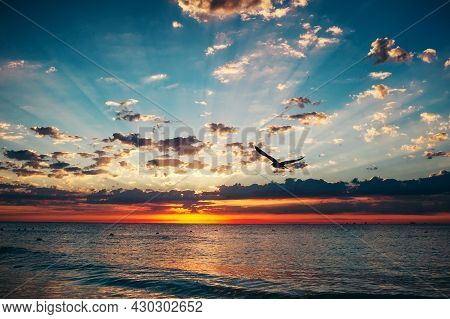 A Single Bird Flies Into The Sunrise, Sunset With Dramatic Clouds Over The Sea. Landscape Of Amazing