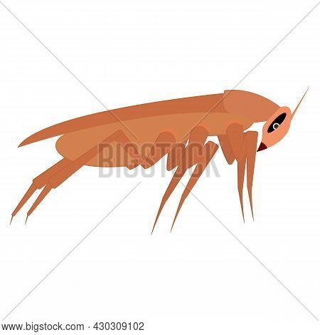Brown Long Cockroach. Side View. Template, Part For Design. Isolated Vector Illustration On White Ba