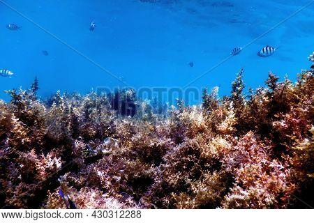 Seaweed, Seaweed Underwater, Seaweed Shallow Water