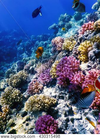 Underwater View Of The Coral Reef, Tropical Waters