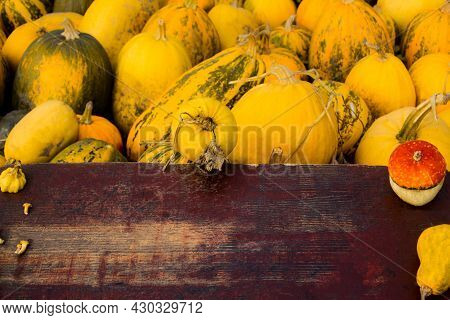 Autumn Frame Composition And Layout Made Of Colorful Pumpkins, Mushrooms, Aged Old Retro Red Backgro