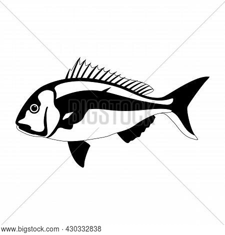 Snapper Fish, Vector Illustration, Lining Draw Side View