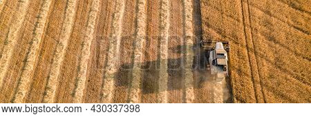 Combine Harvester Works On A Wheat Field. Harvest Season. Agricultural Machine Harvests Ripe Wheat I