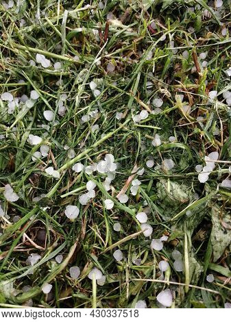 Hail That Fell On The Green Grass In The Summer