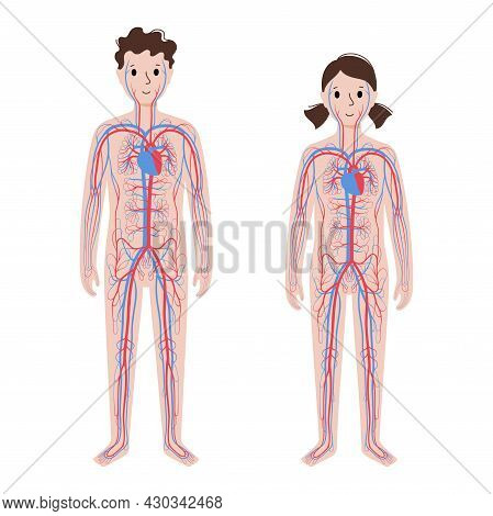 Arterial And Venous Vessels, Circulatory System In Child Body. Blood And Heart In Girl And Boy Silho
