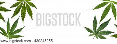 Long Banner With Cannabis Leaves Isolated On White Background. Copy Space. Hemp Leaves, Medical Cann