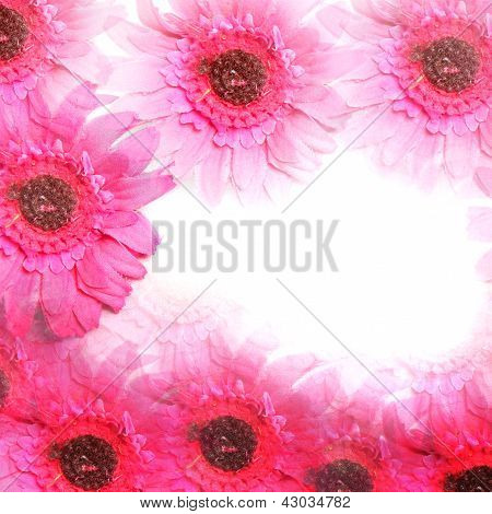 Colourful Pink Flower Border