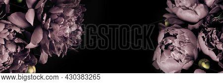 Surreal Peonies Bouquet On Black Banner, Soft Focus. Dark Spring Or Summer Floral Background. Festiv