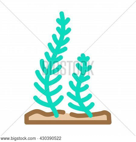 Caulerpa Taxifolia Seaweed Color Icon Vector. Caulerpa Taxifolia Seaweed Sign. Isolated Symbol Illus