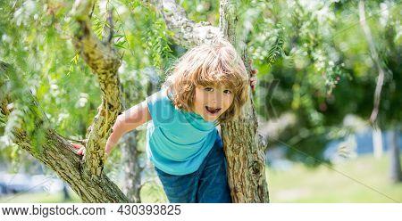 Happy Energetic Boy Kid Climb Tree Summer Outdoors, Tree Climbing