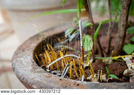 Incense Stick With Ash And Other Remaining Sticks In The Earth Pot Near The Tualsi Plant Also Known