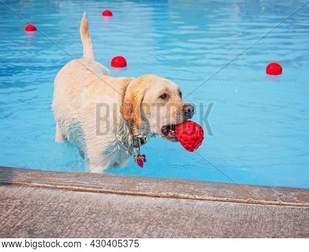 cute dog playing at a public pool on a hot summer day