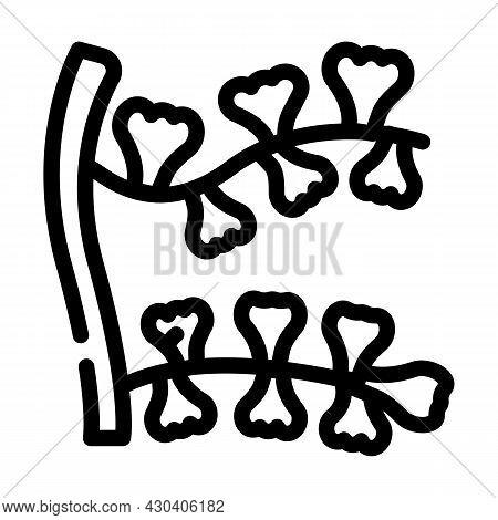 Sargassum Horneri Seaweed Line Icon Vector. Sargassum Horneri Seaweed Sign. Isolated Contour Symbol