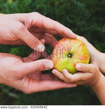 Men's And Children's Hands Hold An Red Apple. Concept: Autumn Harvest, The Principle Of Proper Nutri