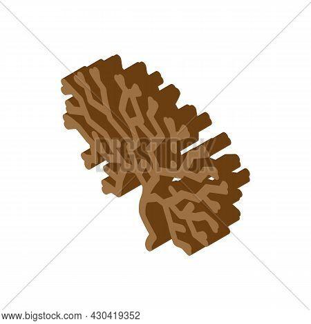 Irish Moss Seaweed Isometric Icon Vector. Irish Moss Seaweed Sign. Isolated Symbol Illustration